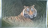 The Tiger in the Forest Handpainted on cloth with natural colours  (Without Frame) (D)